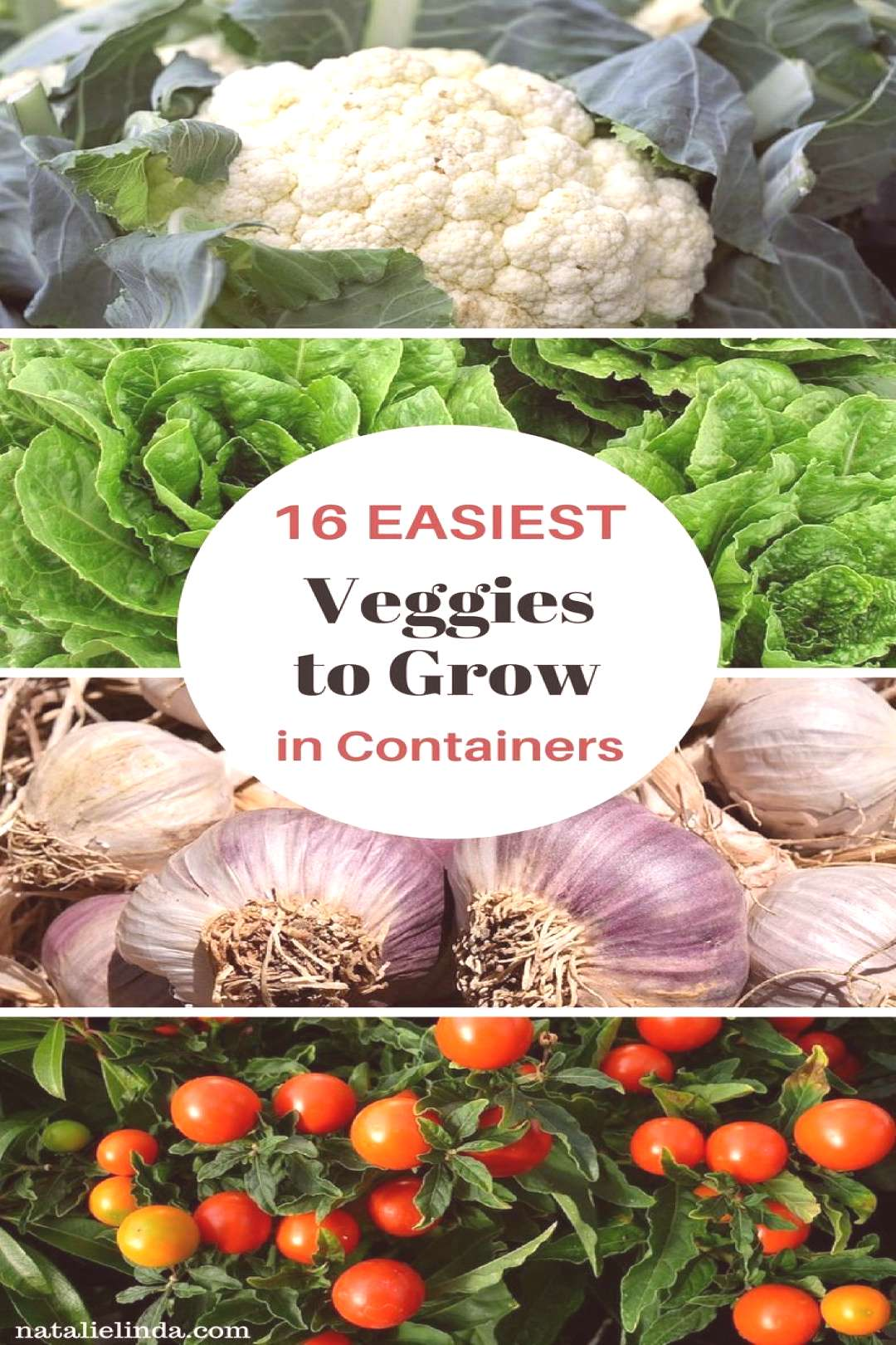 16 Vegetables That Grow In Containers - Natalie Linda These ... -  16 Vegetables That Grow In Conta