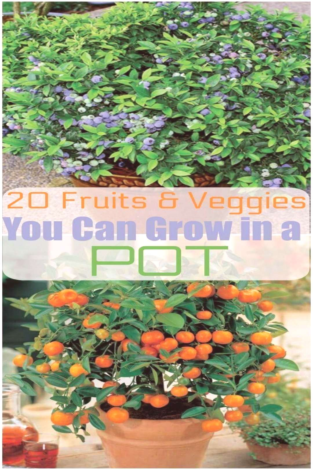 20 fruits and vegetables that you can grow in pots, ... -  20 fruits and vegetables you can grow in