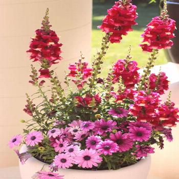 16 Creative Container Designs -  Get ideas for great container flower and plant combinations from H