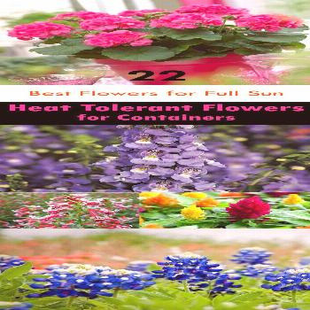 22 Best Flowers for Full Sun | Heat Tolerant Flowers for Containers -  If you're searching for th