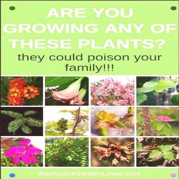 Are You Inadvertently Putting Your Family In Danger? A considerable lot Of The Plants In Your Garde