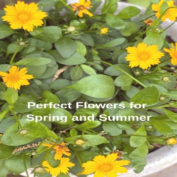 Perfect Flowers for Spring and Summer  We enjoy having flowers that grow well in pots on our deck a
