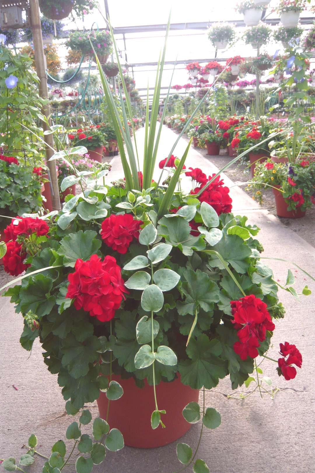 Container Garden Recipe - Great Ideas and Tips for Beginner   patio container gardening   spring co
