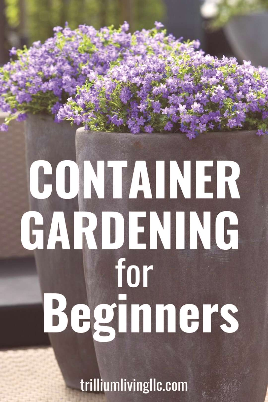 Container Gardening for Beginners -  Container gardening is a great way to decorate your deck, pati