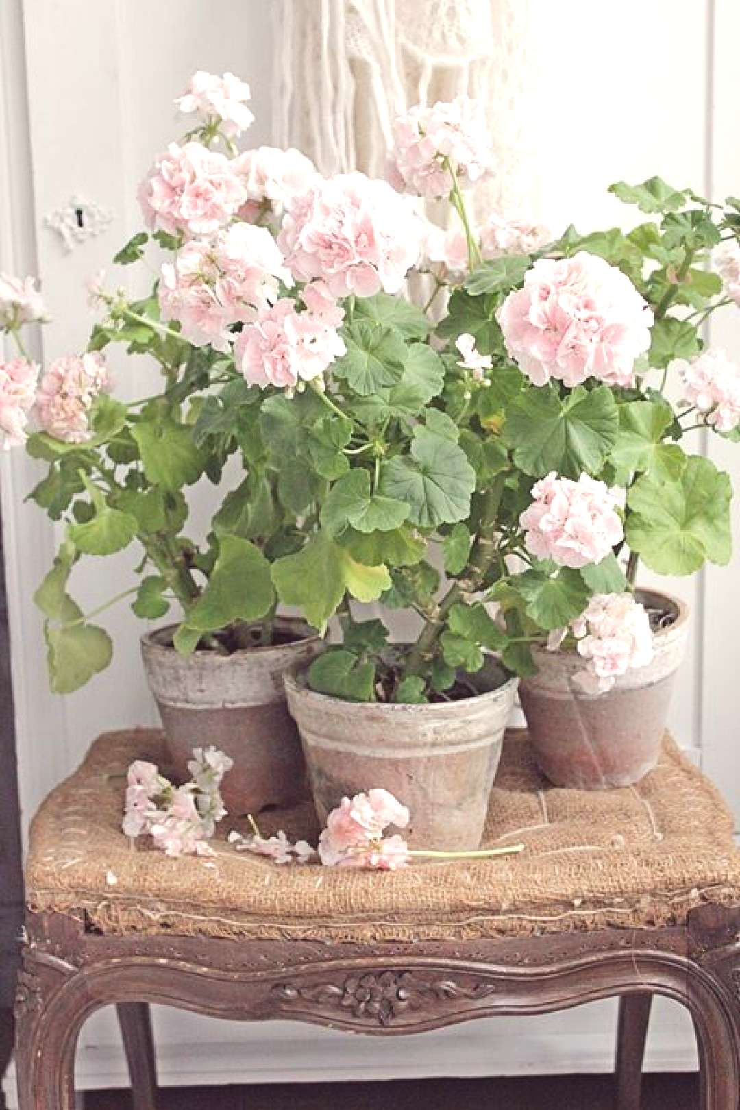 Décor Inspiration: Falling in Love with Geraniums :: This Is Glamorous