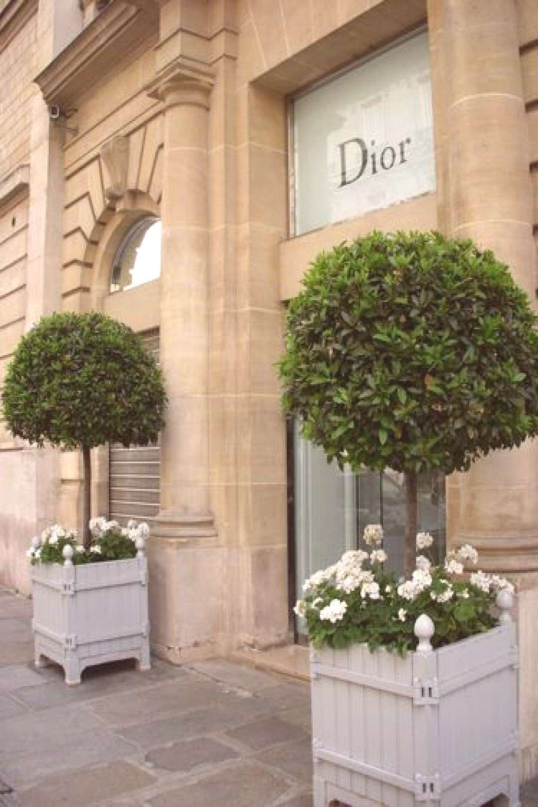 Dior. Stunning topiary bay laurel and white geraniums. Great combo and great loc...#bay