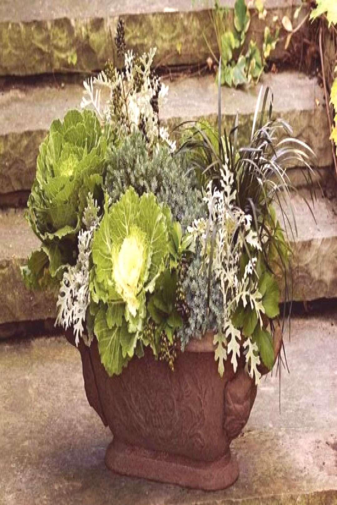 Easy fall planter with dusty miller | Canadian Living -  Easy fall planter with dusty miller  -