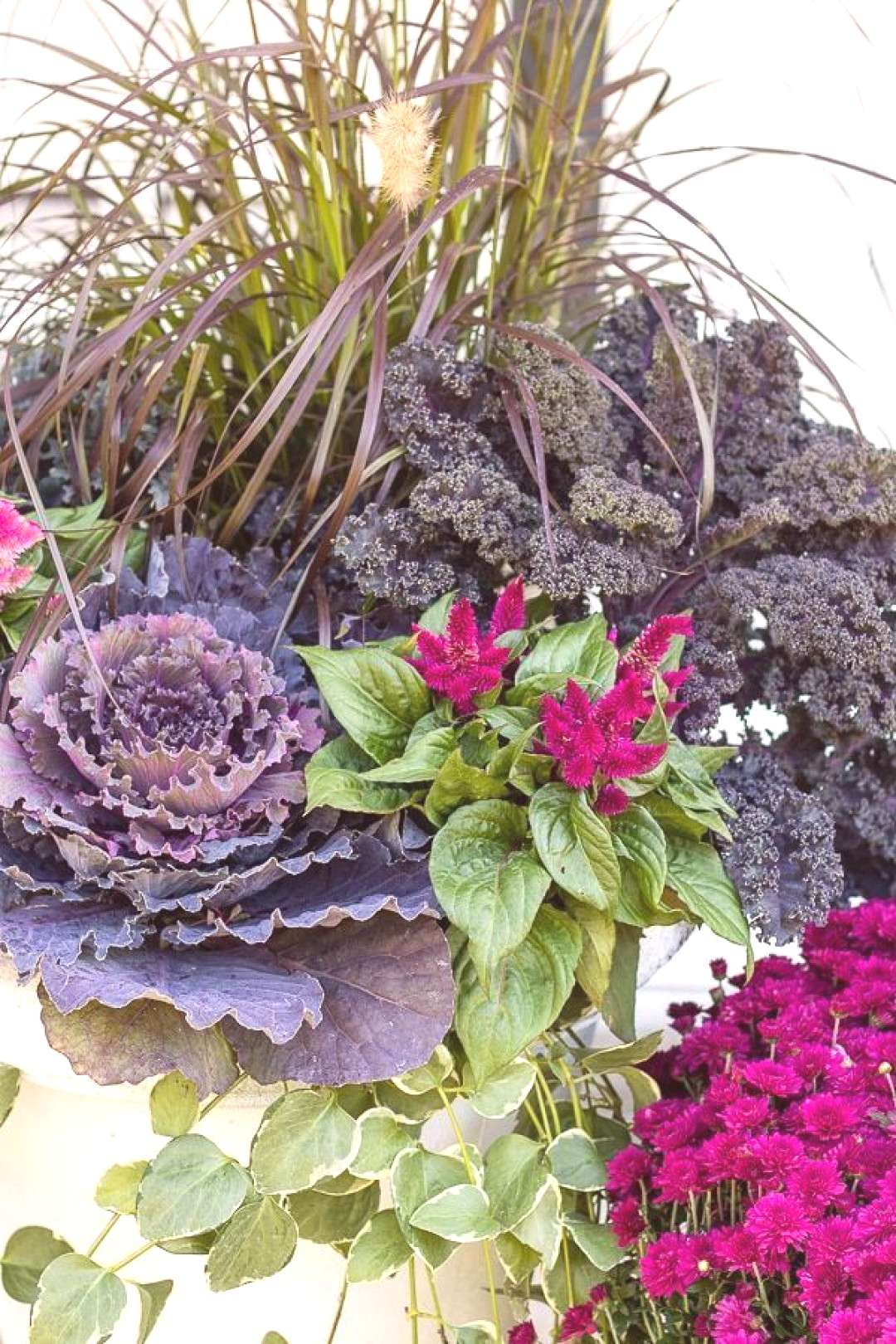 fall front porch decor Cabbage and Kale Fall Front Porch Decor - The Lilypad Cottage -  cabbage and
