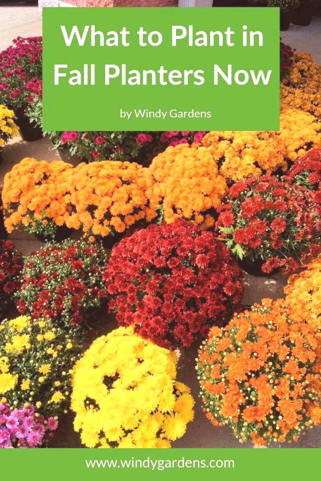 Fall is the time to refresh your summer flower containers with autumn colors and... -  Fall is the