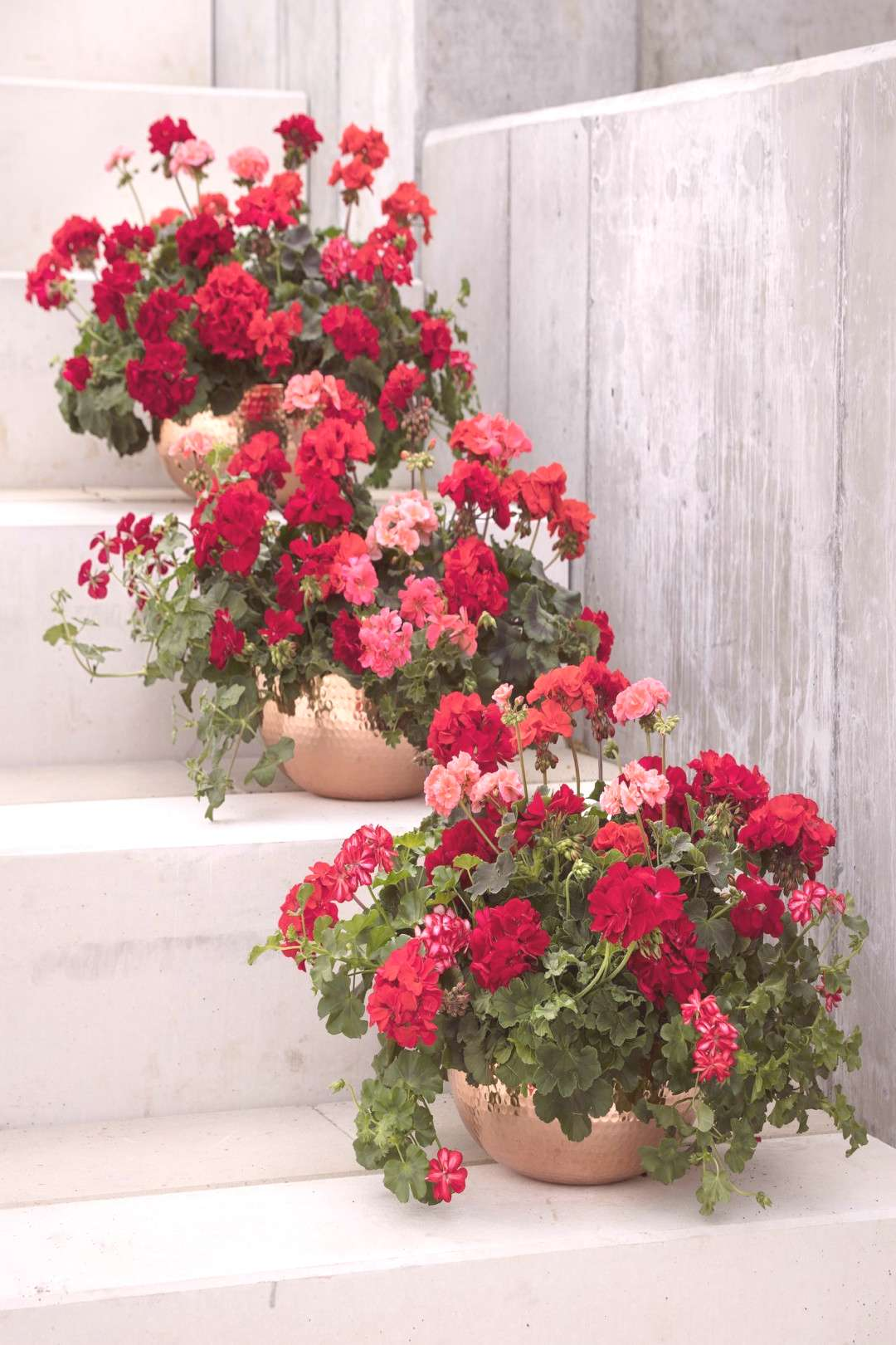Geraniums: 5 flower trends you need to embrace in your garden this summer -