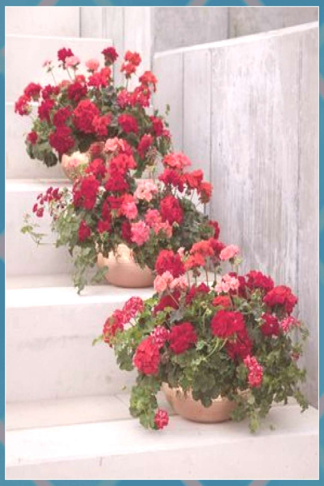 Geraniums: 5 flower trends you need to embrace in your garden this summer roses gardens gates