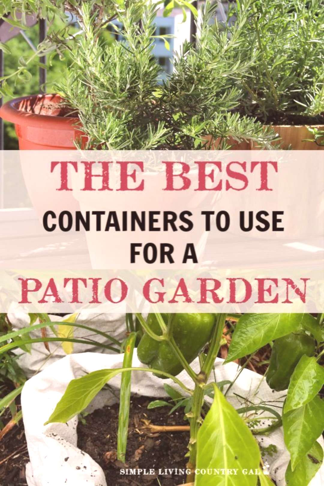 Have you ever grown a vegetable garden on your porch or patio? It is so much eas... -  Have you eve