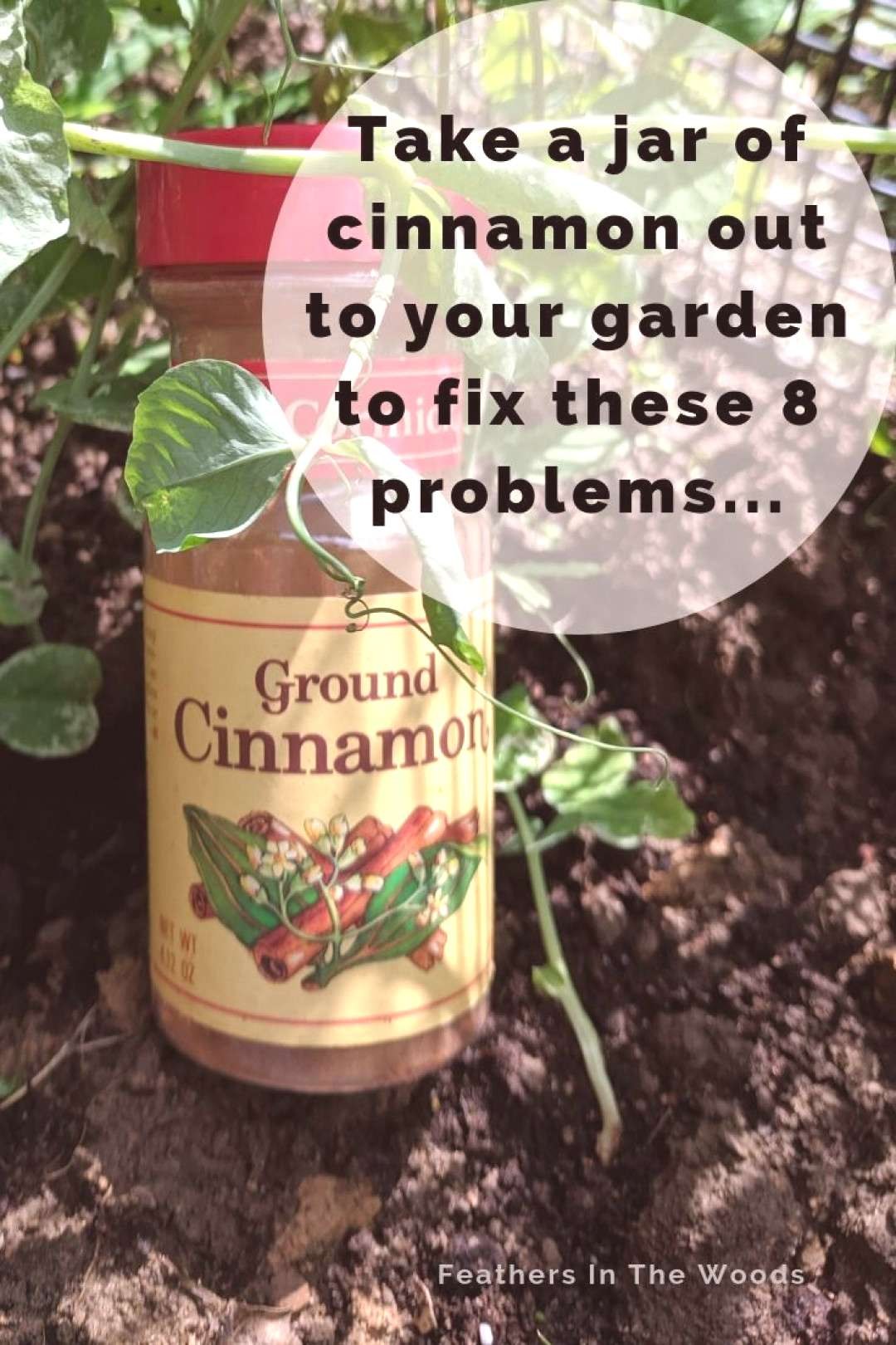 How to use Cinnamon for garden health! -  8 ways to use cinnamon in gardening. From rooting hormone