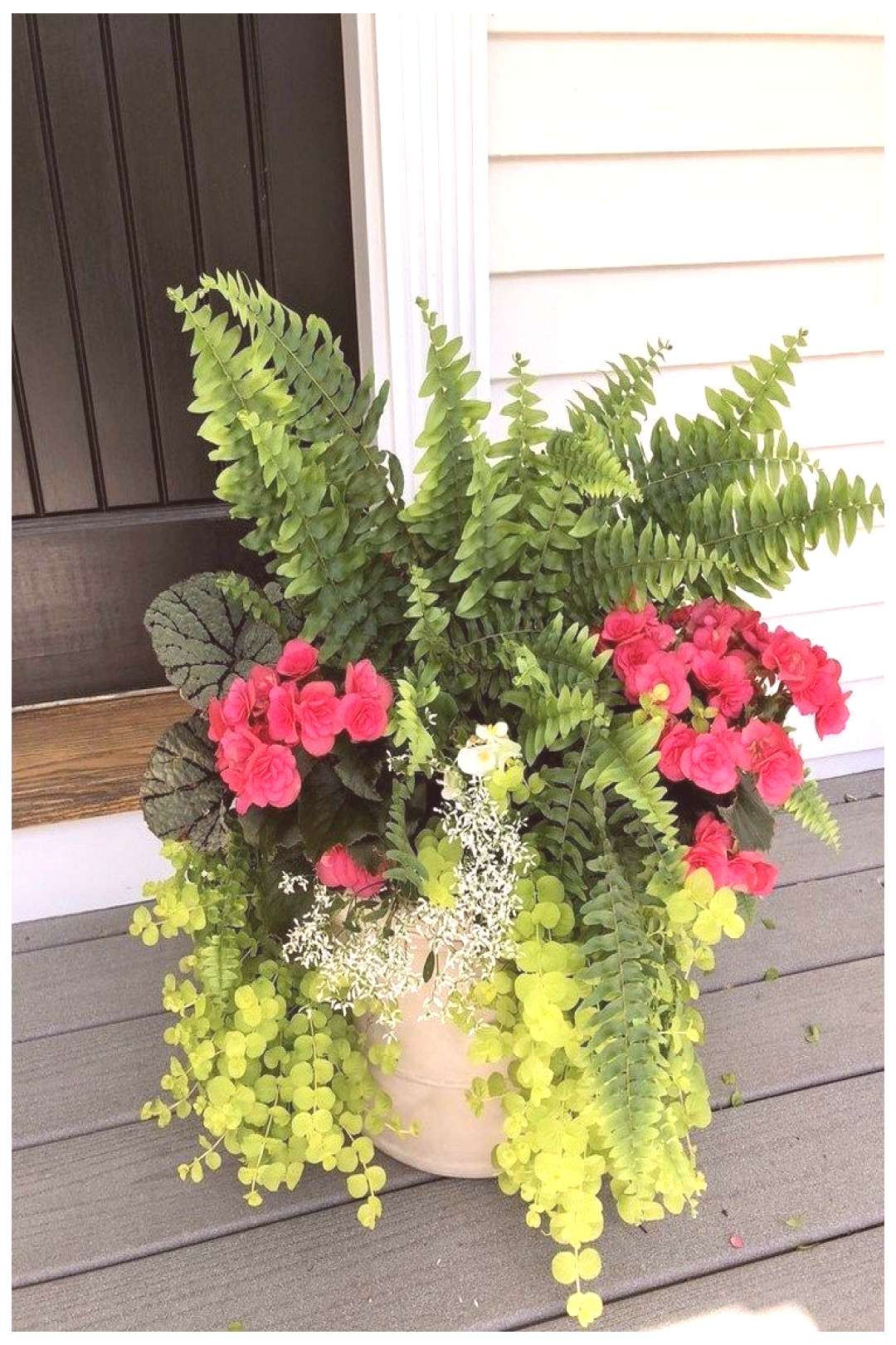 Ideas from 47 planters from my neighborhood 24 -  Container gardening flowers, Container flowers, P