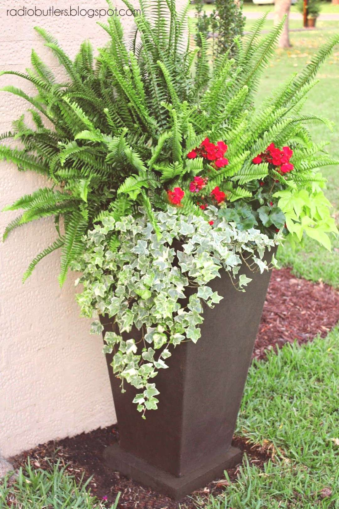 Large container with sun fern, geraniums, sweet potato vine and ivy -  Large container with sun fer