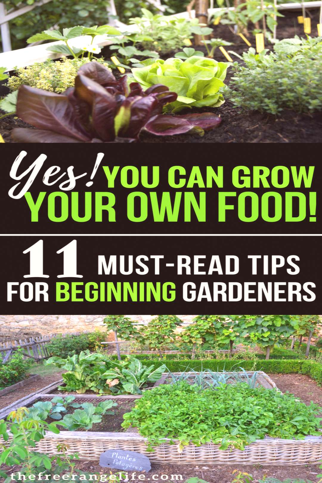 Looking For More Information On Organic Gardening? Consider These Ideas! - Useful Garden Ideas and