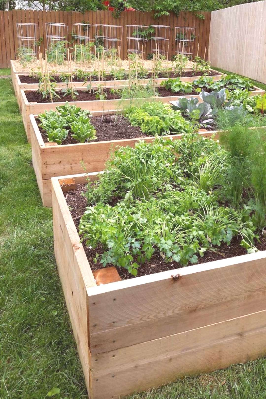 Vegetable Gardening Rows Gardening#gardening -  Vegetable Gardening Rows Gardening#gardening -